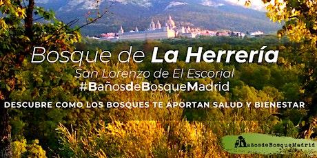 Baño de Bosque sáb 16 Oct - Otoño Bosque La Herrería El Escorial tickets