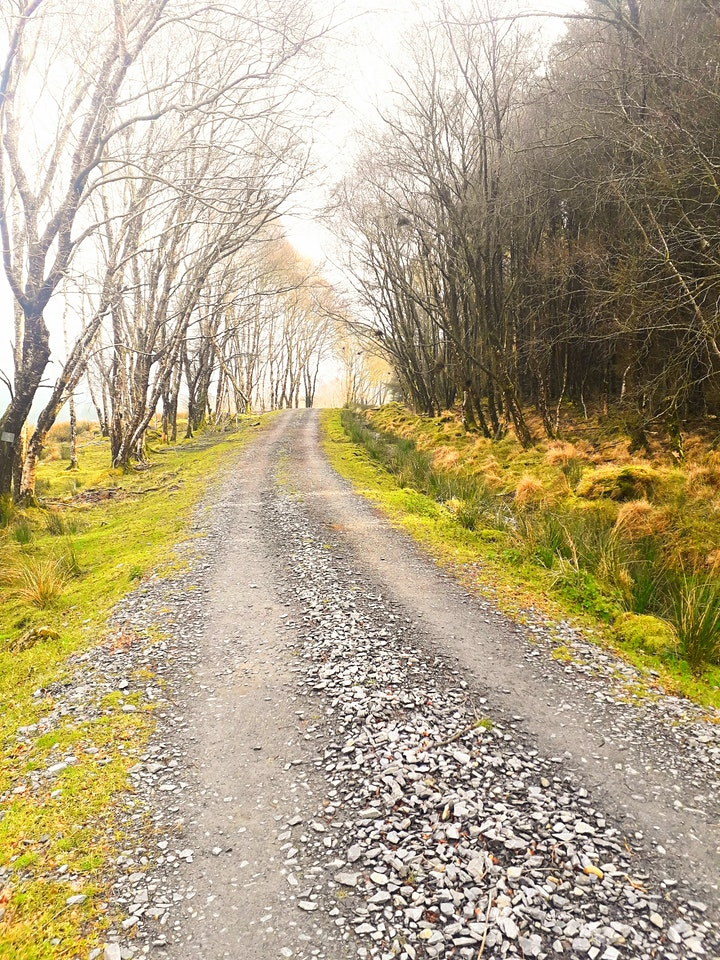 St. Kevin's Way - Hollywood to Glendalough image