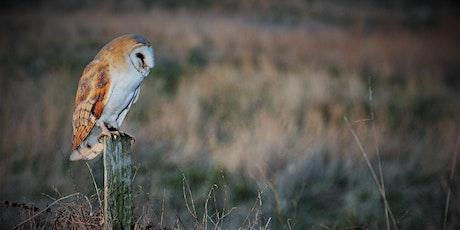 Wild Owl - Conservation of British Owls tickets