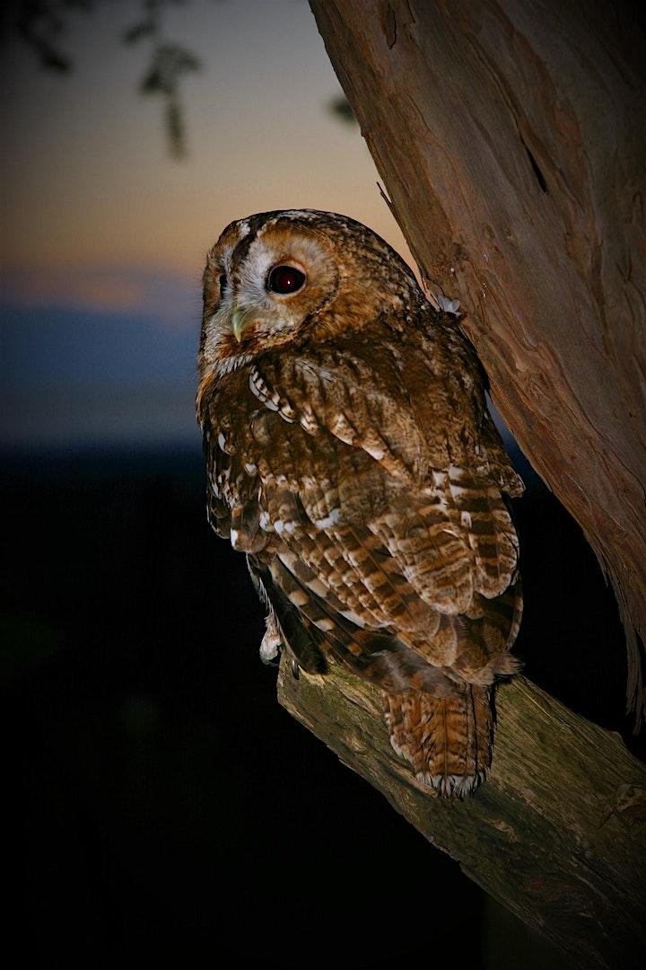 Wild Owl - Conservation of British Owls image