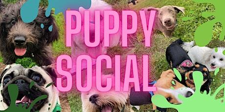 Saturdays & Sundays 11am - Small Puppies Under 10kg tickets