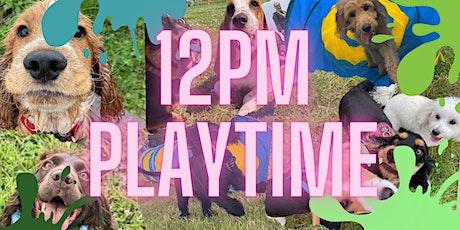 Saturdays & Sundays 12pm - Dogs Up to 20kg tickets