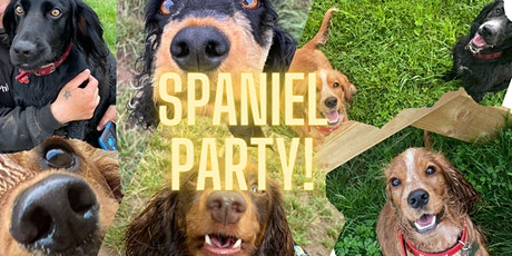 Spaniel Party! tickets