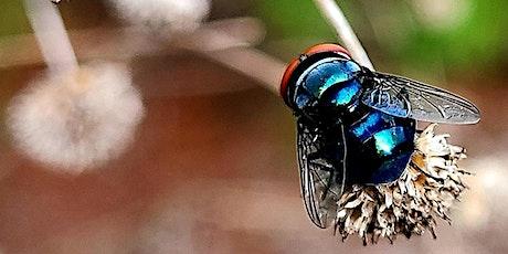 Adventure Awaits - A Buggy Bio Blitz tickets