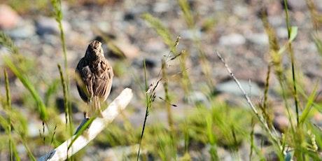 September Bird Monitoring Walk tickets