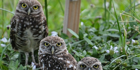 Owl Pellets 101: Investigating Ecosystems (Gr2-8) tickets
