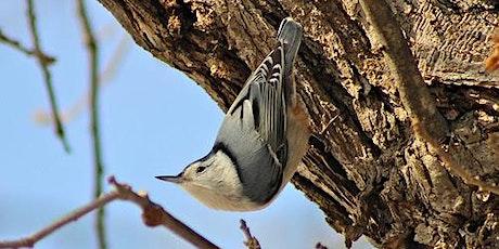 October Bird Monitoring Walk tickets