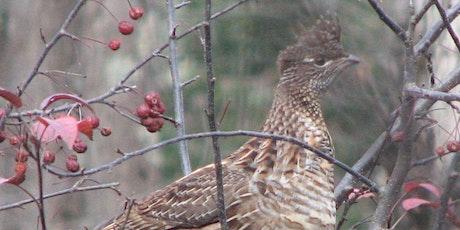 November Bird Monitoring Walk tickets
