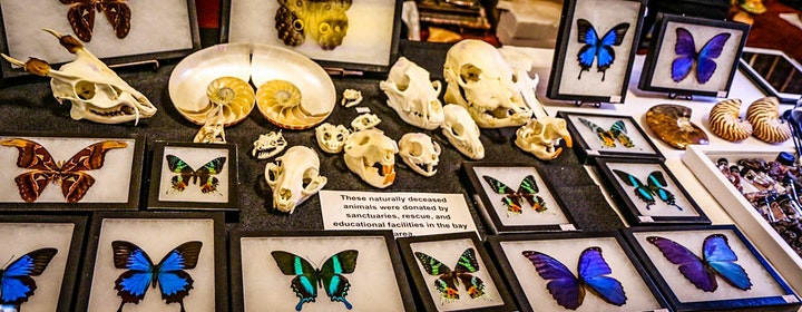 The Menagerie Holiday Oddities Market image