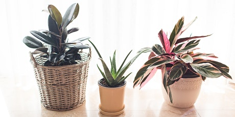 Happy Home Environments: House Plants tickets