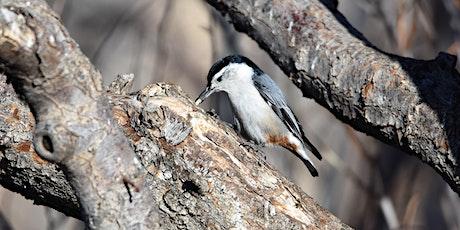 September Bird Walk at Reynolds Park in Conifer tickets