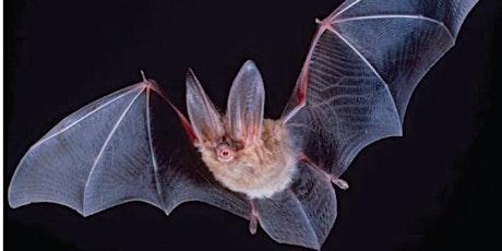 Bay Area Bats tickets