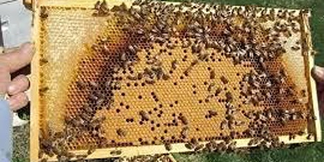 Managing your beehive for maximum results (Module 4 - Intro to Beekeeping] tickets