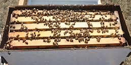 Inspecting the health of your bee hive [Module 5 - Intro to Beekeeping] tickets