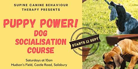 Puppy Power Dog Socialisation Classes tickets