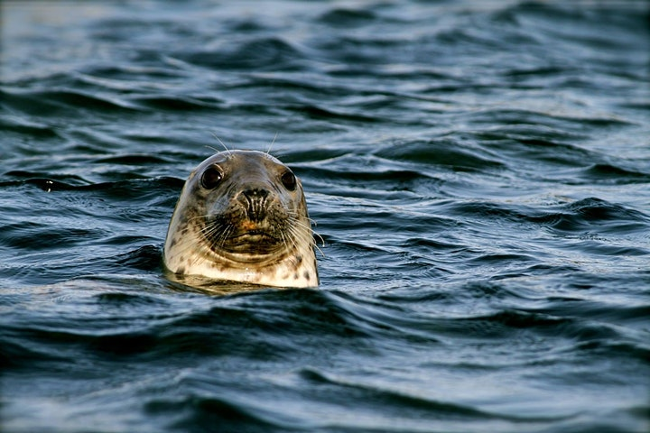 Meet the Scientist - Marine mammals in the Firth of Forth (Online Talk) image