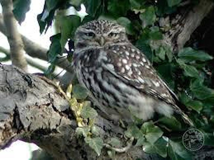 Early morning bird-spotting walk around Willows Farm, Tyttenhanger image