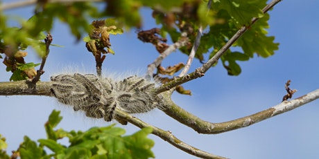 Oak Processionary Moth  (OPM) wash-up & policy update 2021 (IN PERSON) tickets