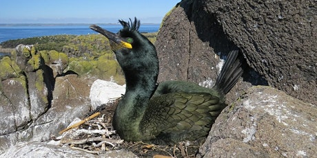 Meet the Scientist - Seabirds living in a Wormy World (Online Talk) tickets