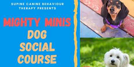 Mighty Minis Small Breed Dog Socialisation Classes tickets