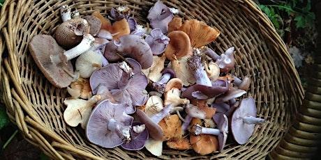 Autumnal Fungi Foray on Chorleywood Common tickets