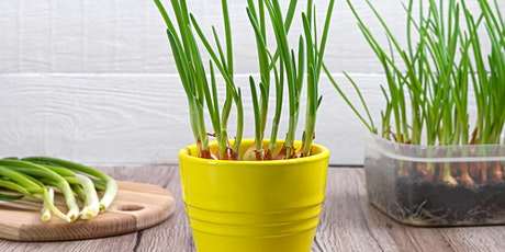 ¿Qué plantar en otoño? Ejemplos de hoja, flor y raíz tickets