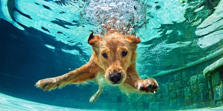 Deep Dive: The Pain Behavior Assessment - Moose's Story tickets