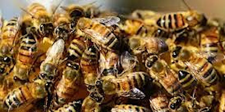 Getting bees for my bee hive [Module 3 - Introduction to Beekeeping] tickets