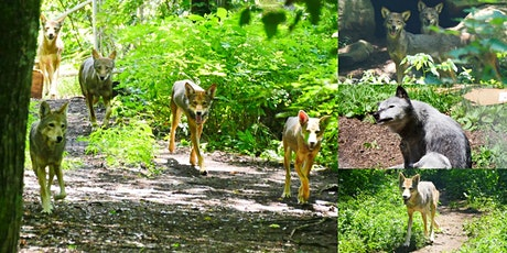 Private Tour @ The Wolf Conservation Center, Endangered Wolves Sanctuary tickets