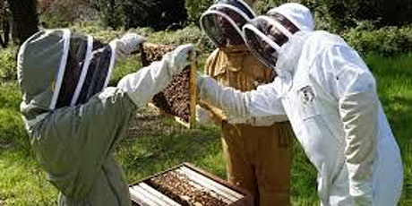 Inspecting & managing your bee hive (hands on workshop) tickets