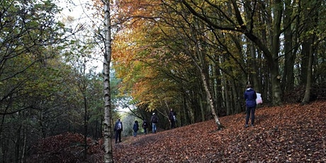 Springwater Sketchbook Walks  #1 - Autumn Series tickets
