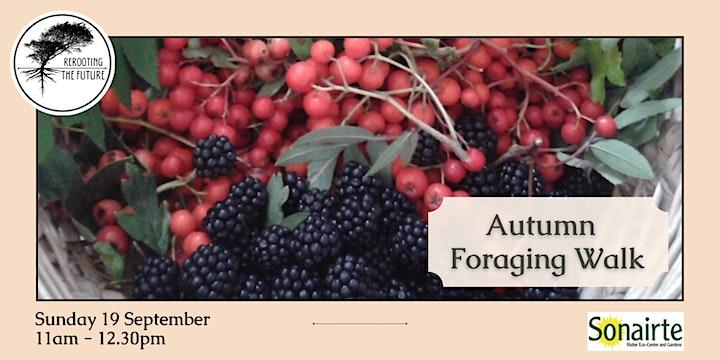 Autumn Foraging with Zaneta Wright at Sonairte image