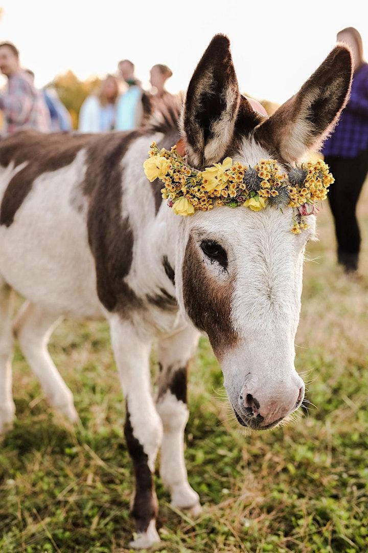 Dining for Donkeys 2021 image