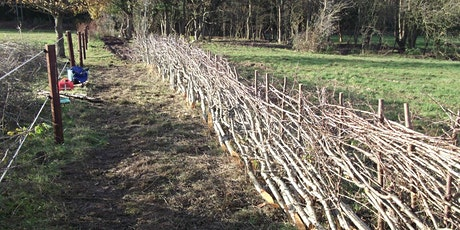 Hedgelaying on Park Fields, Parkgate (October) tickets