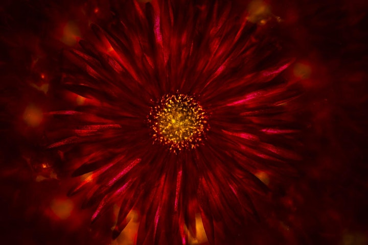 Afbeelding van Hemelbloemen