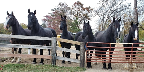 Friends of Madison Mounted Fun at the Farm Fundraiser tickets