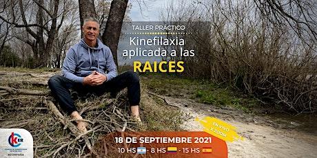Kinefilaxia aplicada a las raíces entradas