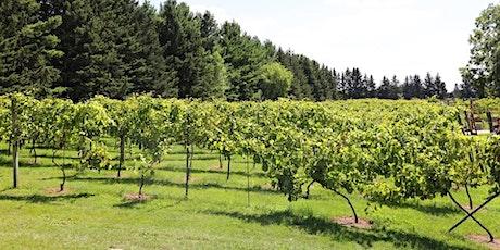 SoLu Grape Harvest Volunteer Sign-Up tickets