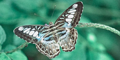 Drawing Club : Fundamentals / Moths tickets