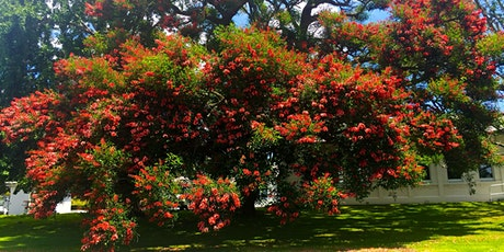 The Tree Council's Guided Walk of Unitec's Carrington Road Campus tickets