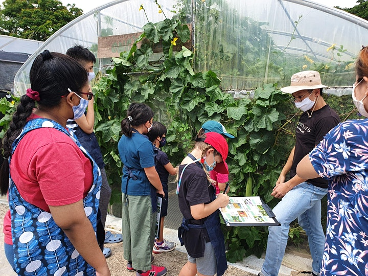 Kombucha Basic Workshop & City Sprouts Guided Farm Tour image
