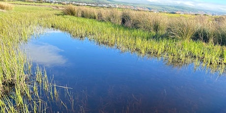 Wetlands tour - Aquatic plants discovery- third session by popular demand tickets