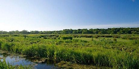 Thorpe Marshes Guided Walk (EDU BROADS) tickets