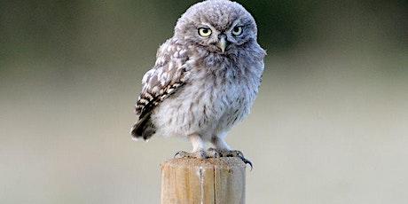 Children's Wildlife Watch - Owls - Zoom event tickets