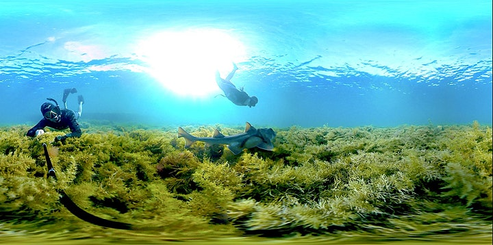 VR Experience - Marine Life of the Great Southern Reef image