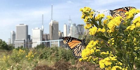 Field Sessions: Brooklyn Bridge Park with Rebecca McMackin tickets
