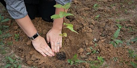 Volunteer Appreciation Celebration and Tree Planting tickets