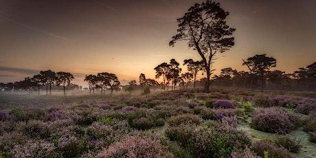 25km in the blooming heather fields of Kalmthout billets