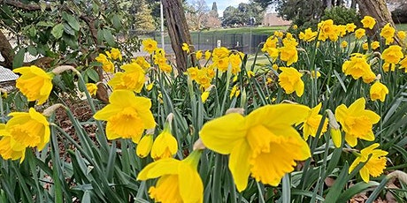 Daffodil Planting Party in Volunteer Park tickets