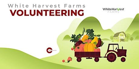 White Harvest Farms Volunteering tickets